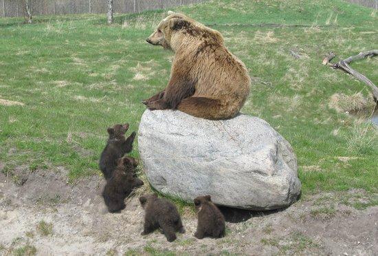gangbang jylland skandinavisk dyrepark rabat
