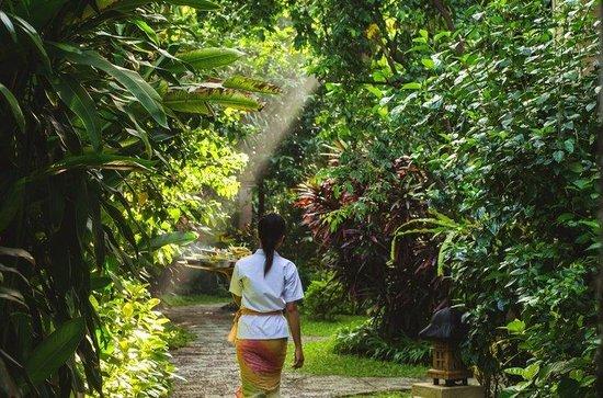ศรี พาลา รีสอร์ท แอนด์ วิลล่า: Garden