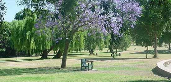 Johannesburg, Sydafrika: Park
