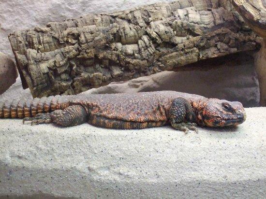 Augsburg Zoo: im Reptilienhaus