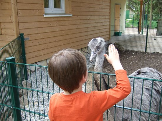 Augsburg Zoo: 2 seltene Vögel...