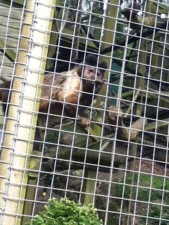 The Monkey Sanctuary : Looe Monkey Sanctuary