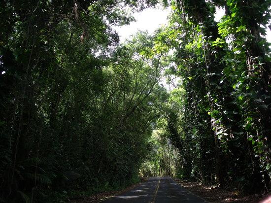 Honey's Restaurant: the tree tunnel