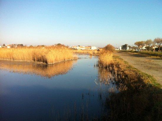 Le Maset : au bord de l'étang des petites Launes