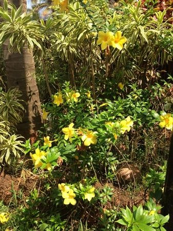 Vivanta by Taj - Holiday Village, Goa: Добавить подпись