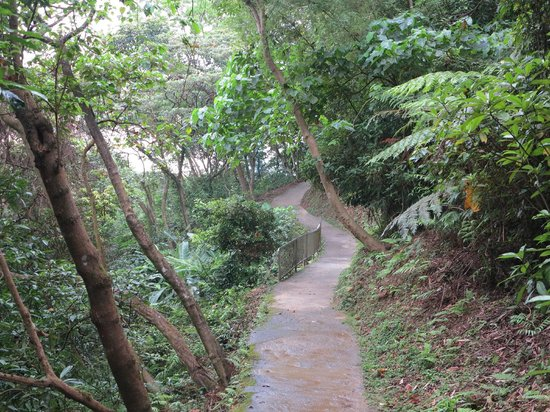 Jodie's Kitchen Cooking Class: Walking down elephant mountain from Jodie's house