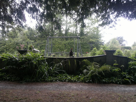 Woodland Cottage Garden: Friendly Hen