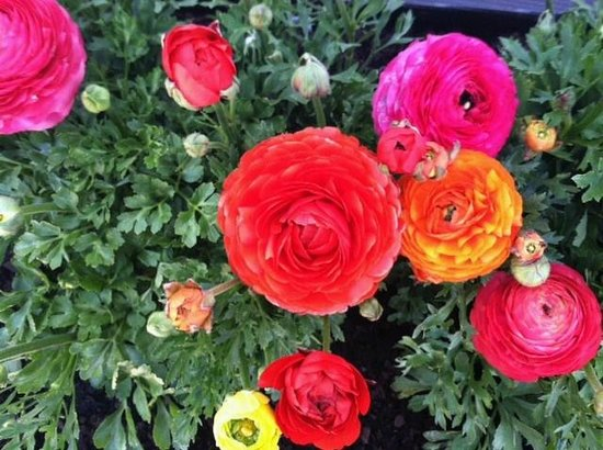 Ipswich Clambake Co: Flowers out front!