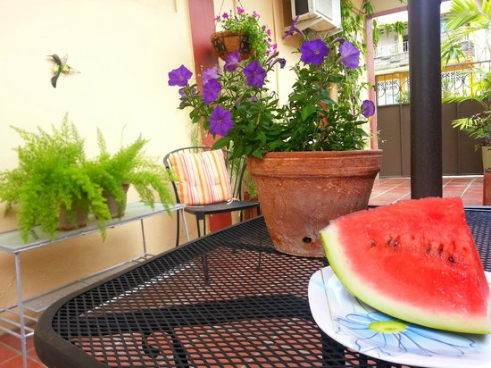 Thanna's Place, Bed & Breakfast : Fruits for breakfast anyone?