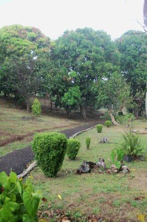 Laura's Herb & Spice Garden : View of garden