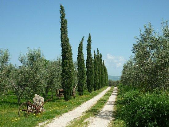 Agriturismo Le Sorgenti : Ingresso tra gli oliveti