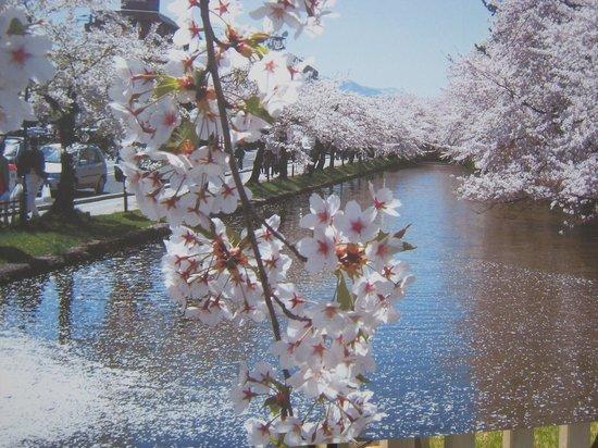 弘前公園(鷹揚公園), 桜