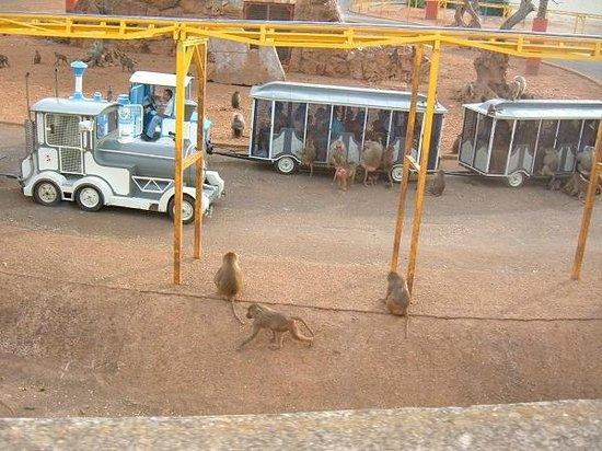 Fasano, Italy: Trenino blindato tra le scimmie