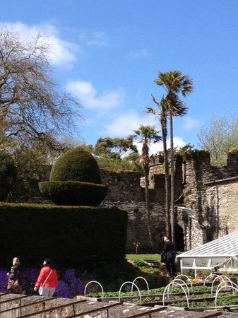 Lismore Castle Gardens & Gallery: palm trees?  how cool