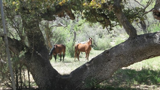 Elkhorn Ranch: Sunday day off for the horses