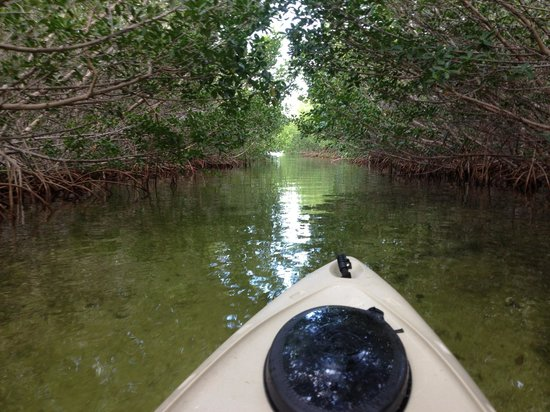 Kon-Tiki Resort: Kayaking through the Mangroves
