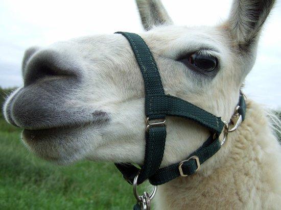 "Catanger Llamas: Yasser ""is this my good side?"""