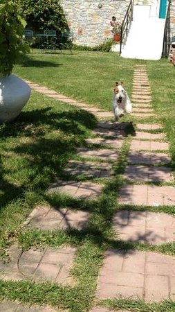 Angeliki Beach Hotel : my 14-month old wire fox terrier very happy in the hotel's garden