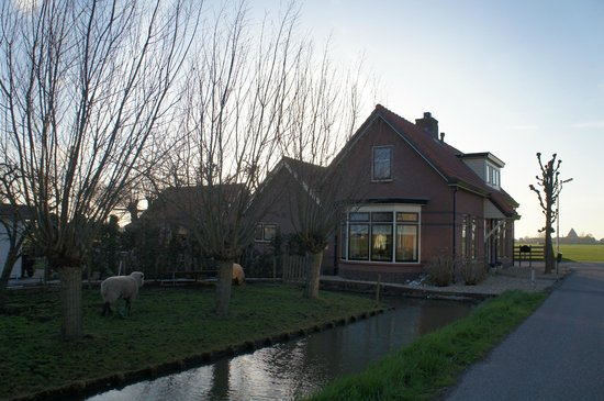 De Zonnehoed: Spot the sheep!