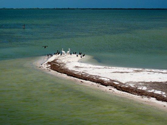 Explora Holbox Kayak Tours: scorcio isola degli uccelli