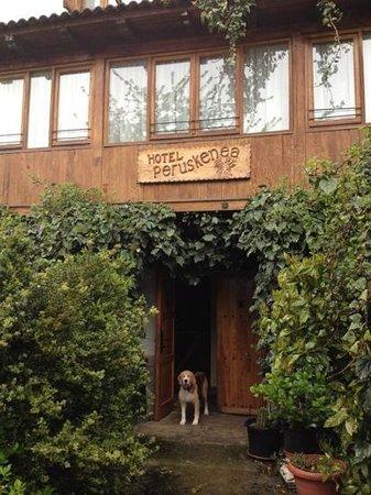 Hotel Peruskenea : Robert the dog