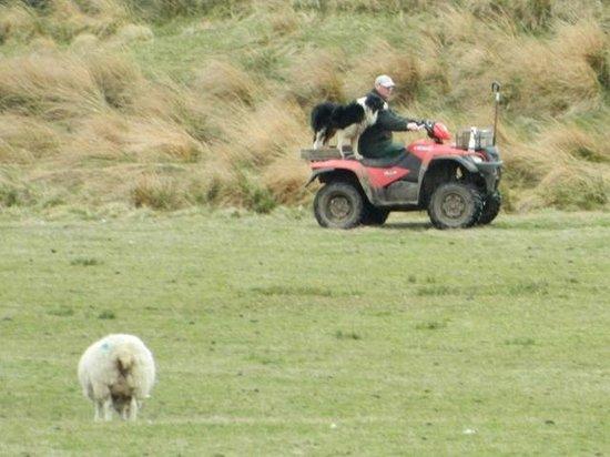 Bridgeford Farm: The sheepdog on a quad!