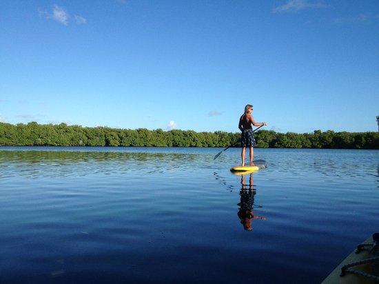 Surfsong Villa Resort : Stand up Paddling through the mangroves at Surfsong, BVI