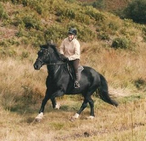 Cannock Chase Trekking Centre: Out on the Chase