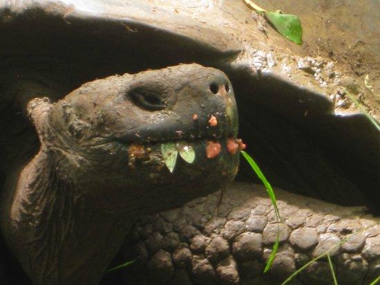 Semilla Verde Boutique Hotel: Onsite tortoises!