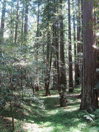 The Mendocino Tree: Montgomery Woods -- hanging valley
