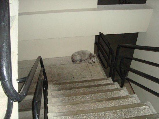 Marbellamar Hotel & Resort: el perro del hotel