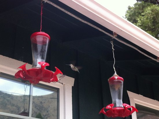 The Kern Lodge: Hummingbirds