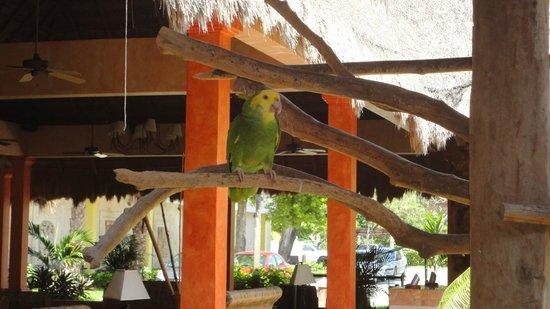 Iberostar Quetzal Playacar: hermoso lugar