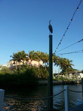 Matanzas on the Bay: Birds watching over