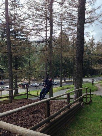 Go Ape Whinlatter: Zipline landing