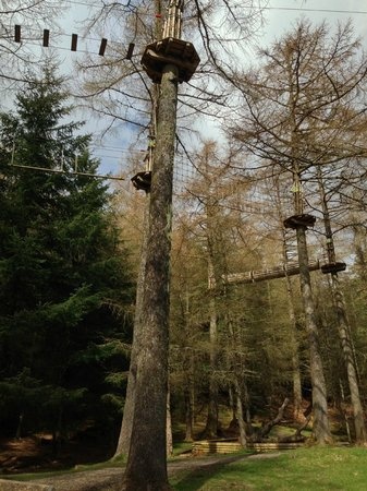 Go Ape Whinlatter: See platforms, bridges, etc.
