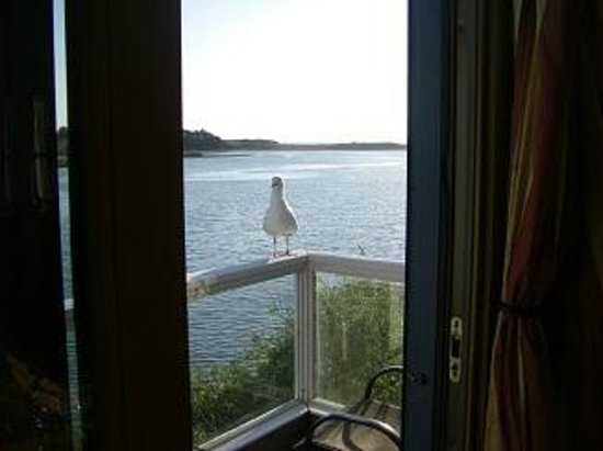 The Jenner Inn: Our view from Merlin room, we had a visitor