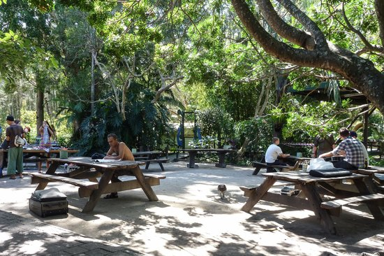 The Arts Factory Backpackers Lodge: outdoor area with picnic tables
