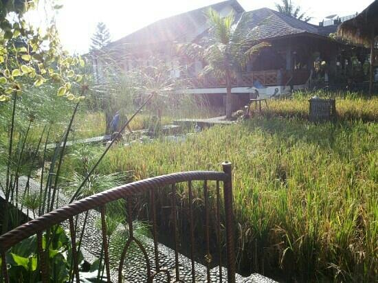 New Ayuda Hotel: rice field and its farmer right in front of your room