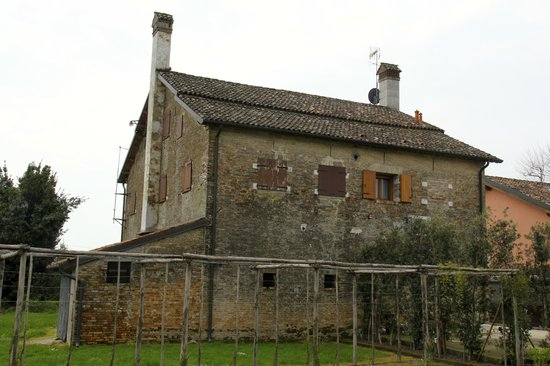 Agriturismo Ca' Beatrice: Vineyard and what was likely the original sharecropper's home