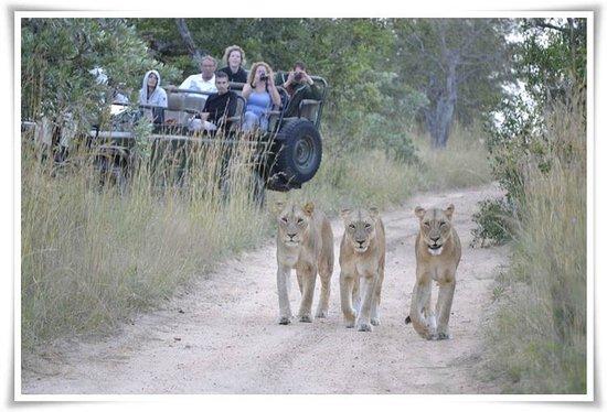 Tangala Safari Camp: Excellent game viewing