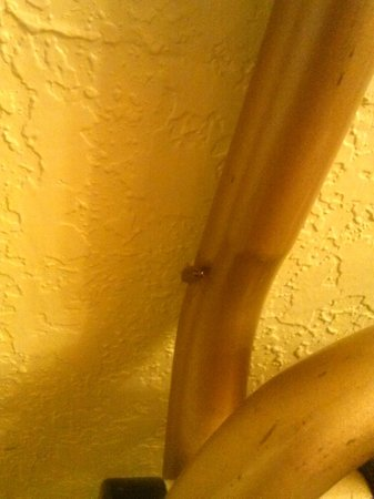 Days Inn Homestead : 1 roach found in the room