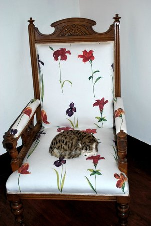 Ard-na-Coille Guest House: This is not a real cat! Chair in the hallway.
