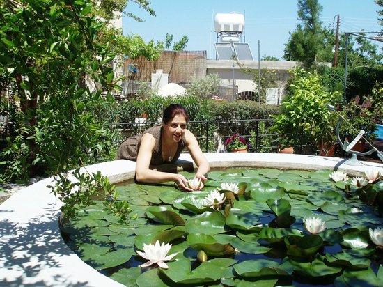 Vasilion Agrotourism: waterlillies