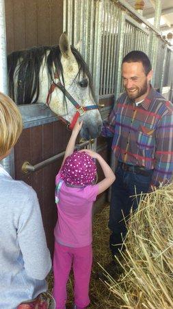 Agriturismo il Moro: Cavallo