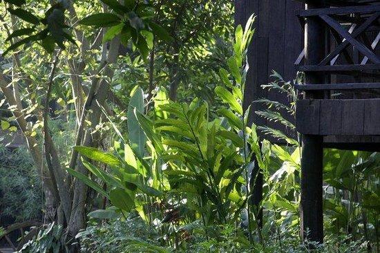 Maison Polanka: gardens