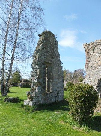 Jervaulx Abbey: Archway/Window