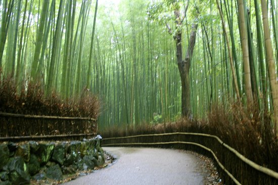 Sagano: Moments of solitude in the bamboo foreest
