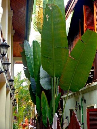 Oudomsouk Guest House: entrance