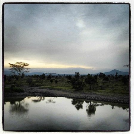 Swara Plains Acacia Camp: Lake reflection at nightfall- gorgeous!